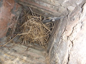 Chimney flue blocked by a birdsnest